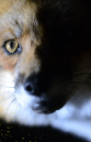 Lush Anti fur Campaign