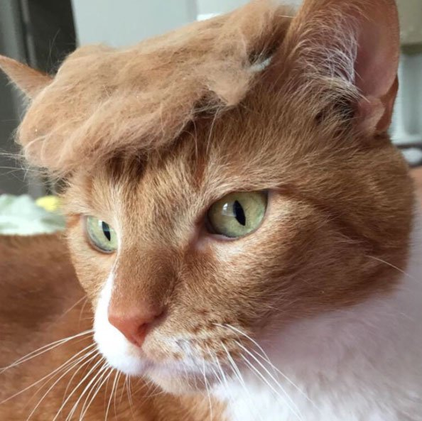 Best Cat Memes Ever