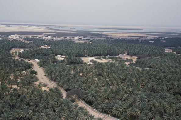 Palm grove, Wadi Sur in Ras al-Khaimah, United Arab Emirates