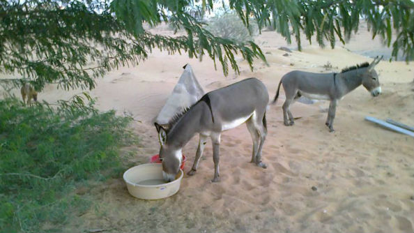Animal Welfare Project UAQ