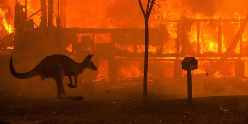 australia bush fires donate