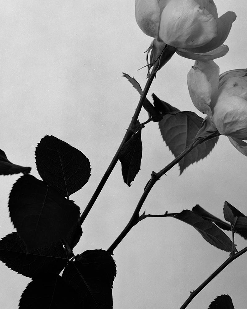 aesop-rozu-eau-de-parfum-barnabe-fillion-interview